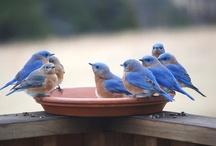 Birds~~Birdhouses~~Gardens / by Rachel Rushing