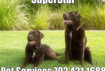 Pet News SuperStar Pet Services spanning the globe to bring you the latest Pet News! / by SuperStar Pet Services