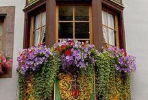 Flower Boxes / by Jill Van Camp