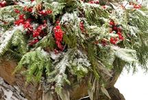 Winter/Christmas / by Nancy M