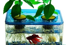Aquaponics / A community of like minded people sharing the knowledge on how to grow fish and plants in a symbiotic relationship. Healthy and Fresh. / by 99boomerangs