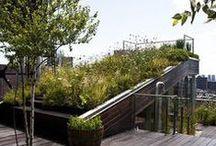 Green Roof / by Bettina Sch.