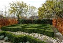 Topiary 2 / by Bettina Sch.