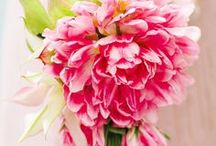Pinkalicious...I Do's / by Sherry Hagen