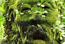 Poison Garden / by Blume Bauer