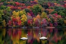 Autumn / My Favourite Season / by bakinginpyjamas.com