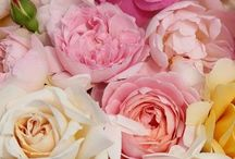 Flowers we love! / by Flora Girl