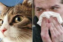 Allergies / by Fibro Wellness People