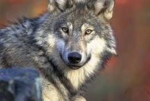 Animals / Creatures (Fauna) / by Alicia Geedey