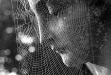 Spider Webs and their Creators.. / by Catherine Bonser