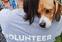 Our Volunteers and Foster Moms and Dads / There are many ways you can help. There are many ways to help LDDR that include fostering, volunteering your talents and some you don't even have to leave your home! We have many tasks to accomplish to keep us running smoothly. Please consider volunteering your time to assist us in our cause. Thank you! / by Last Day Dog Rescue