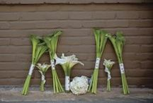 Celebrate with Calla Lillies  / purity,magnificence,beauty. / by Kate Aspen