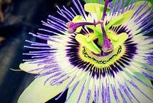 Flora Fun / by Sandy Weir