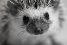 cuteness / by Abby Kong