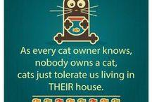 Cat Humor / by Joanie Dakis Mierzwa