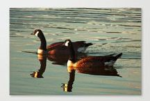 """Summer Geese"" Product Design's by: Kim Pate / Inside this board you'll find most, if not all, of the designs I've created from my piece ""Summer Geese"" I hope you enjoy them as much as I enjoyed creating them. Please look, repin if you want to, and-or buy what you like. Have a good one.. :) / by Kim Pate"