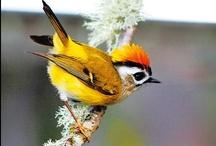 Birds / by Owlet