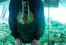 Marijuana Etc. / Marijuana, Weed, Cannabis, Pot, Smoking Fun, Marijuana Acessories, Herb, Cannabis Businesses, Medical Marijuana, The NorCal Connection & More   / by The NorCal Connection LLC