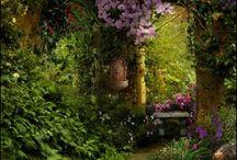 Gorgeous Gardens / by Doreen Murphy