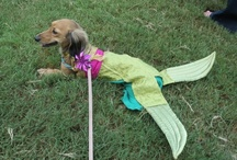 DREAM Dachshund Fun / Pictures of dachshunds having fun at our rescue's events in Atlanta. / by DREAM Dachshund Rescue