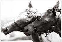 equus / horses help our hearts heal / by Leah Wilbur