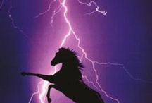 Purple Reign! / by Rhonda Sharp