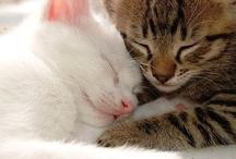 Cats &kittens / by Lennie Pelich