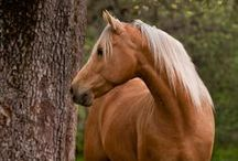 Horses / by Cassidy Magazine™