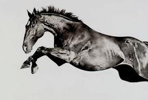 Equine <3 /   / by Hannah Lefler