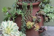 Gardening Ideas / by Carolyn Prescott