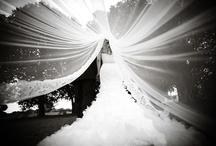 Weddings  / by Gianna Langrehr