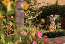 Gardens at Azalea Inn & Gardens / by Azalea Inn and Gardens
