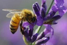 Bees and Bee Keeping / by Mertice Cunico