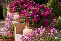Debbyshell's Design Dreams-Alfresco / Outdoor Design- Landscaping, Front Porch,Patios, Decks etc..... / by Deborah G.