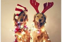 Holiday Spirit / by Sarah Evans