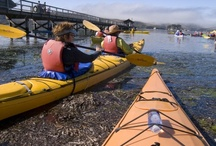 Point Reyes Field Institute / by Point Reyes National Seashore Association