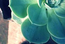 SUCCULENTS / by Xochicali Vivero