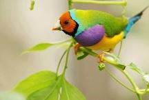 Birds   ԑ̮̑♦̮̑ɜ ✿⊱╮╭⊰✿  ԑ̮̑♦̮̑ɜ✿⊱╮╭⊰✿ܓ / by Welcome Everyone.