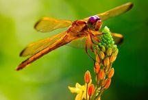 Magical Dragonflies  / by Jill Watson-Randazzo