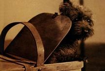Cairn Terriers / by Kathleen Warren