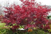 Beautiful Trees / by bingononny