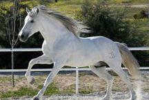 Horses / by Christiane Abb