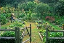 Gardening / by Ann Kallas
