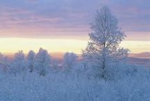 Winter Wonderland / by MyChelle Dermaceuticals