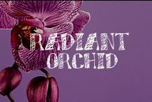 Moore: Radiant Orchid / It's the hottest color of the year! Incorporate PANTONE Color of the Year 2014 Radiant Orchid 18-3224 into your life with these craft & DIY ideas. / by A.C. Moore Arts & Crafts