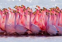 Beautiful Birds / by Yasmeen K