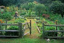 Gardening / by Jaclyn Rinehart