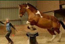 Parelli Natural Horsemanship Clinic / by High Hopes Therapeutic Riding
