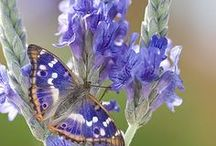Butterflies, Ladybugs And Such~ / by Vicki Beckman