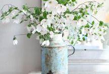* displays - of the floral kind / by Susan Fairbairn